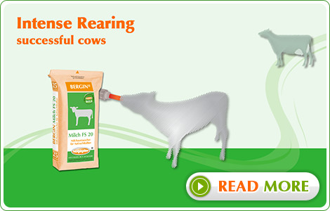 Intense Rearing - sucessful cows