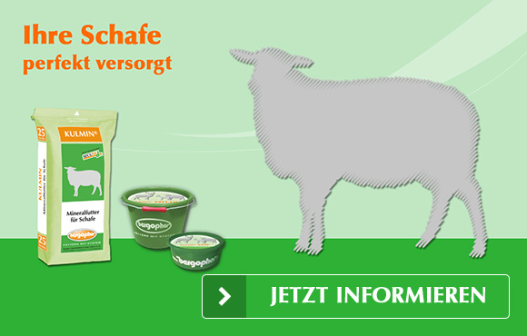 Mineralfutter Schafe - Ihre Schafe perfekt versorgt