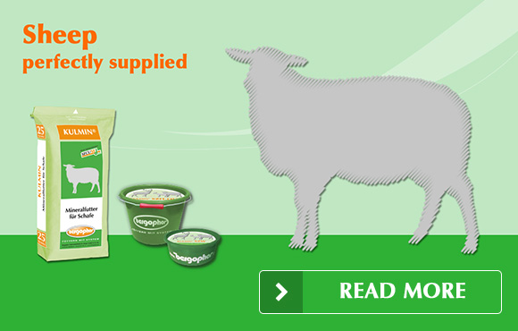 Sheep perfectly supplied